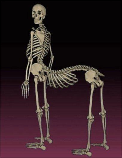 centaur-skeleton.jpg