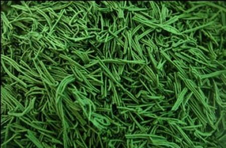 ¿Son afrodisíacas las algas? 1