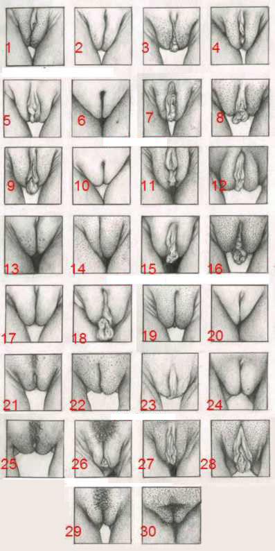 Vaginas de muchos tipos 1
