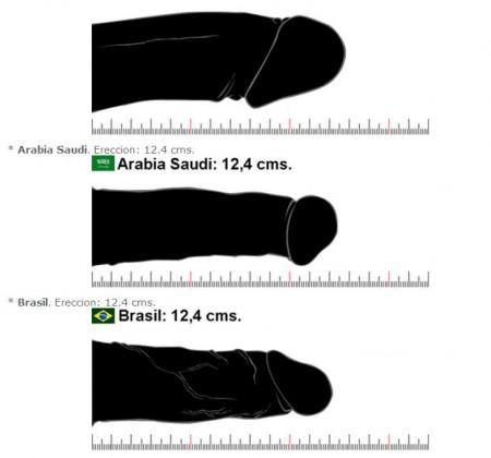 Promedio de tamaños de penes del mundo 2