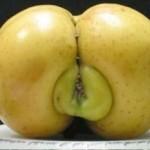 Sexo en la naturaleza 6