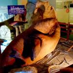 El Museo del sexo de Beppu, muy raro 9